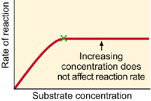 3 what was the effect of using less enzyme on your experiment Free essay: lab report (effect of concentration on enzyme activity) biology noor alawadhi 11- kc introduction: an enzyme is a protein, which is capable of.