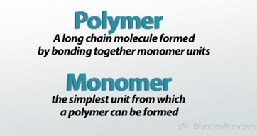 Nucleic Acids Are Polymers Made Up Of Monomers Of Protein