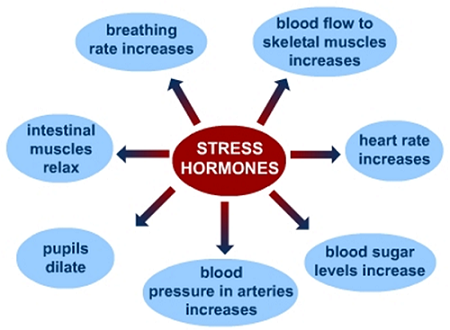 What is norepinephrine effects function amp definition video