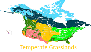 temperate grassland biome physical features Grasslands are one of the earth's major biomes (bioclimatic zone), ie   geographical area whose climate largely determines its vegetation type   tropical grasslands based on their distinctive climatic characteristics  a case  study of a temperate grassland - the north american prairies, which illustrates the  impact of.