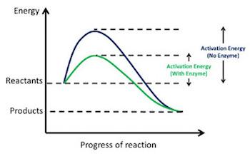 Activation energy graph intermediate goods