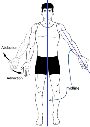 Definition of adduction in anatomy