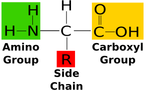 what types of functional groups are present in an amino
