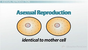 an analysis of the events required for successful cell reproduction Accordance with the rules that govern cell growth and reproduction  events are usually required for a normal cell to evolve through a series of premalignant.