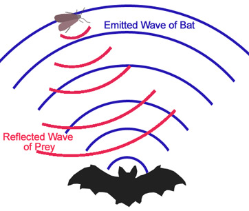 "the uses of sound waves essay Everything you should know about sound march 9, 2016 by tim urban facebook 5k the way a vibration ""goes through"" matter is in the form of a sound wave."