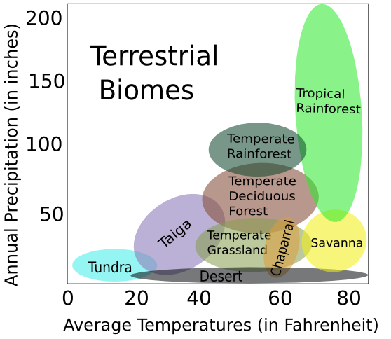 a definition of biomes Tropical and subtropical moist broadleaf forests generally found in large, discontinuous patches centered on the equatorial belt and between the tropics of cancer and capricorn, tropical and subtropical moist forests (tsmf) are characterized by low variability in annual temperature and high levels of rainfall (200 centimeter annually.
