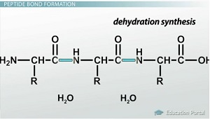 Synthesis of phosgene