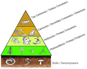 How Is Energy Typically Stored In The Food Chain