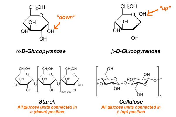 alpha d glucose and beta relationship goals
