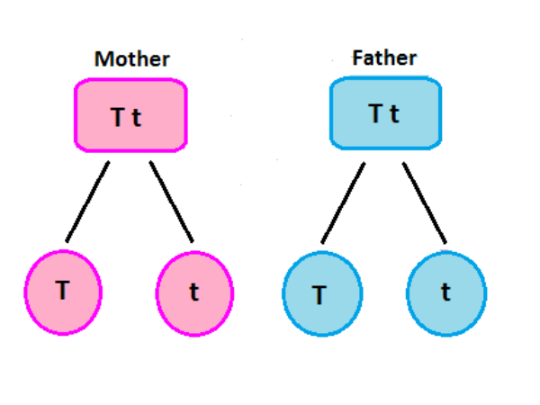 diagram of dominant simple dominance: definition & concept - video & lesson transcript | study.com