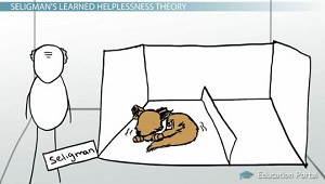 Learned Helplessness: Seligman's Theory of Depression (+ Cure)