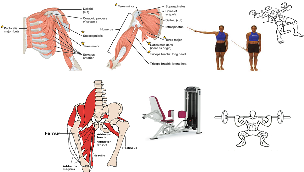 Adduction: Definition, Example & Exercises - Video ...