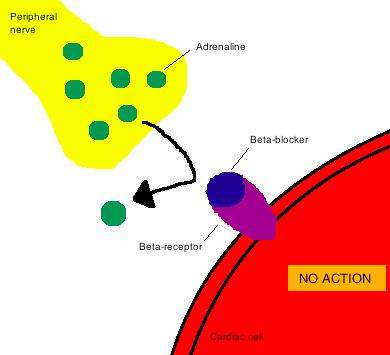 Long-term treatment with losartan versus atenolol improves ...