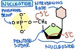 Nucleotide Definition