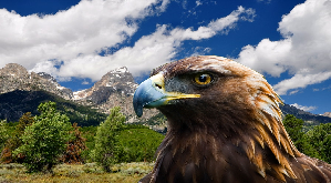 analysis on eagle by lord alfred Analysis of alfred lord tennyson's the eagle thesis: in his poem the eagle, alfred lord tennyson portrays the eagle as a creature of superiority and power tennyson paints this picture by depicting the eagle's purposeful actions.