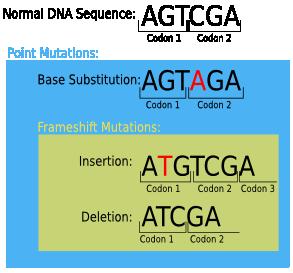 Point Mutation; Mutation, Point