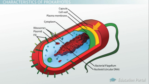 The Evolution of Prokaryotes: Archaebacteria and ... Unicellular Organisms Diagram