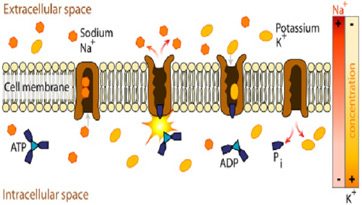 Does nacl require a transport protein for diffusion