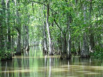 Abiotic Factors That Affect The Everglades Ecosystem Html Autos Post