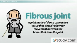 cartilaginous joints exhibit amphiarthroses why is this important The skeletal system: joints  o amphiarthroses - slightly moveable joints  • cartilaginous joints o some are immovable (synarthrotic), while most are.