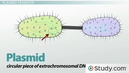 a look at the process of genetic exchange in prokaryotes Get an answer for 'what is the structure that some bacterial cells use to exchange dna' and find homework help for other bacteria questions at enotes  creating two cells with similar genetic .